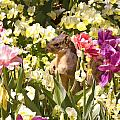 Squirrel In The Botanic Garden-dallas Arboretum V6 by Douglas Barnard
