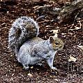 Squirrel In The Park-boston  V6 by Douglas Barnard