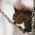 Squirrel In Winter by Pati Photography