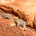 Squirrel by Jamie Heeke