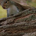 Squirrel by Kathleen Struckle