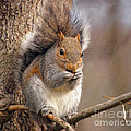 Squirrel  by Kerri Farley