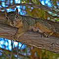 Squirrel Looking Down On Viewer by Allen Sheffield