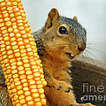 Squirrel by Lori Tordsen