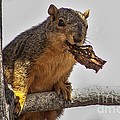 Squirrel Lunch Time by Robert Bales