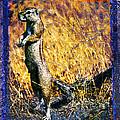 Squirrel by Mauro Celotti