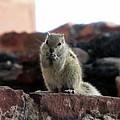 Squirrel by Mozahedul Islam