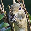 Squirrel by Nancy L Marshall