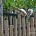 Squirrel On A Tightrope by Joel De la torre