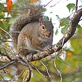 Squirrel On Branch by Jeanne Kay Juhos