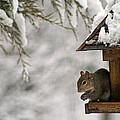 Squirrel On The Bird Feeder by Karen Adams