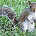 Squirrel On The Grass by Zina Stromberg