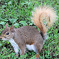 Squirrel On The Ground by Dwight Cook