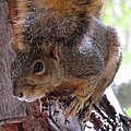 Squirrel by Patricia Feind