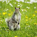 Squirrel Patrol by Christina Rollo