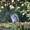 Squirrel Perched by Matt Malloy