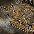 Squirrel Pose 1112 by Deborah Benoit