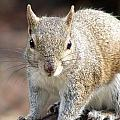 Squirrel Profile by Ian Mcadie