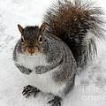 Squirrel Saying Feed Me Please At Niagara Falls by Rose Santuci-Sofranko