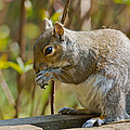Squirrel by Scott Carruthers