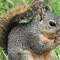 Squirrel Thief by TN Fairey