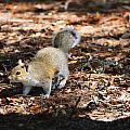 Squirrel Time by Linda Kerkau