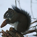 Squirrel by Tonya Hance