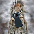 Squirrel With Cellphone by Mike Agliolo