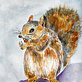 Squirrel With Nut by Vicki  Housel