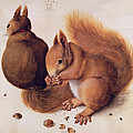 Squirrels by Albrecht Duerer