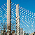 Sr-509 Cable Stayed Bridge by Tikvah's Hope