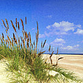St  Augustine Beach Grass by Wynn Davis-Shanks
