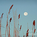 St. Augustine Beach Moonrise by Phil King