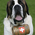 St. Bernard Dog by Rolf Kopfle