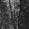 St-denis Woods 2 by Mario MJ Perron
