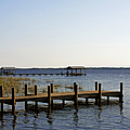 St Johns River Florida - Walk This Way by Christine Till