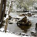 St Patricks Day Cranberry River by Thomas R Fletcher