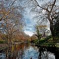 St. Stephens Green Trees by Jason Lanier