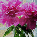 Stained Glass Peonies by Barbara Griffin
