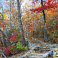 Staircase To Fall by Lynn Bauer
