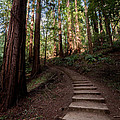 Stairs Into The Woods by Alexander Fedin