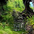 Stairway Through The Forest by Mary Deal