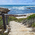 Stairway To Asilomar State Beach by Priya Ghose