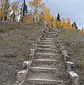 Stairway To Autumn by Brian Boyle