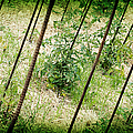 Stakeout - Garden Fresh - Baby Tomato Plants by Andee Design