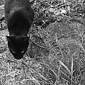 Stalking Cat by Melinda Fawver