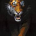Stalking Tiger by MGL Studio - Chris Hiett