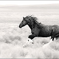 Stallion Blur by Wes and Dotty Weber