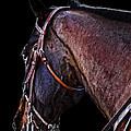 Stallion by Camille Lopez