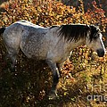 Stallion Of The Badlands by Adam Jewell